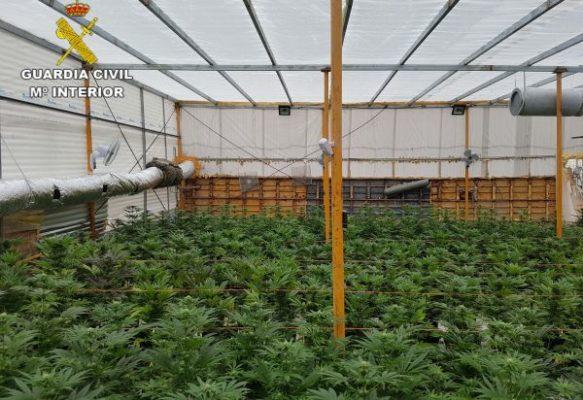 Plantación de marihuana El Ejido