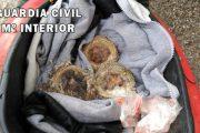 La Guardia Civil encuentra en el maletero de un ciclomotor 13 crías de fringílidas aún en sus nidos