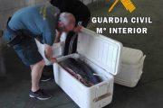 Intervenidos 269 kilos de atún rojo en una lancha deportiva en Carboneras
