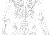 Cómo combatir la espondilosis a través de la andulación