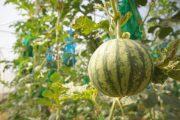 La sandía entra en la lista de los diez productos hortofrutícolas andaluces más exportados