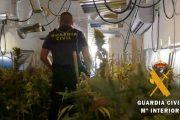 Detenida una mujer por cultivar 650 plantas de marihuana en una vivienda de Roquetas de Mar