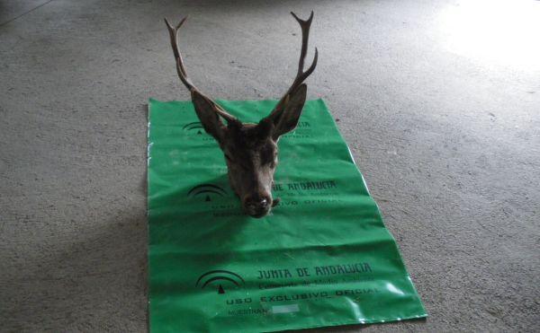 Ciervo-caza-Filabres