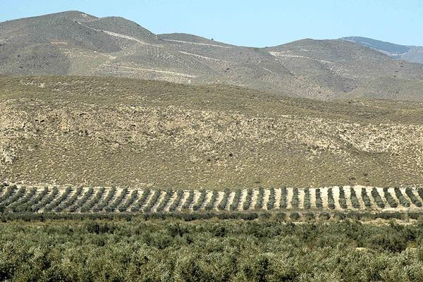 La empresa almeriense Castillo de Tabernas presenta un nuevo producto gourmet llamado 'Alyña'