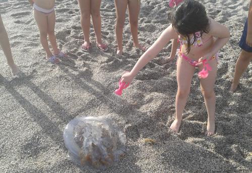 La curiosidad de los bañistas estaba más que justificada en la playa de Almería ante la medusa gigante