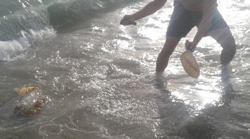 El peso de la medusa gigante de Almería partió sin problemas una pala de juego