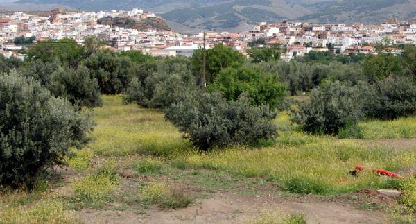 Fiñana-Espacio-Huella-aromática