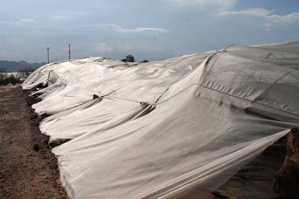 El BOJA publica la convocatoria de ayudas para seguros agrarios
