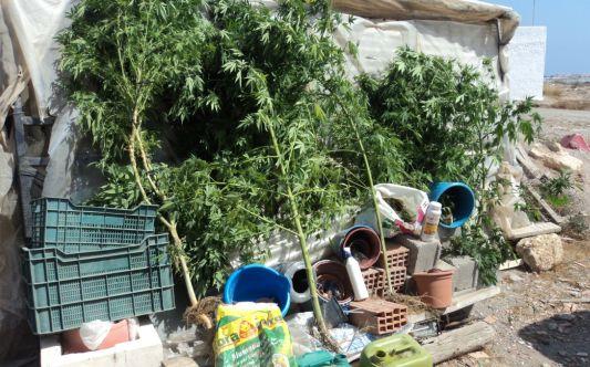 Marihuana en Vícar
