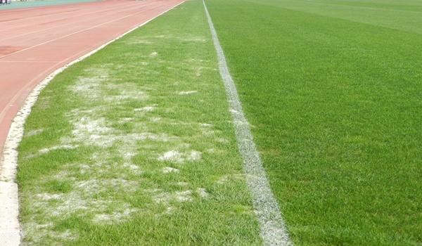 El hongo que afectó a la hierba del Estadio de los Juegos Mediterráneos ya fue 'identificado'