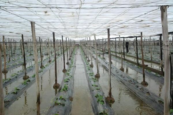 Las lluvias han sido un desastre en Las Norias, El Ejido, por la Balsa del Sapo