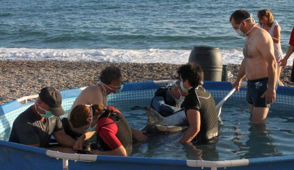 Delfín hembra Balerma