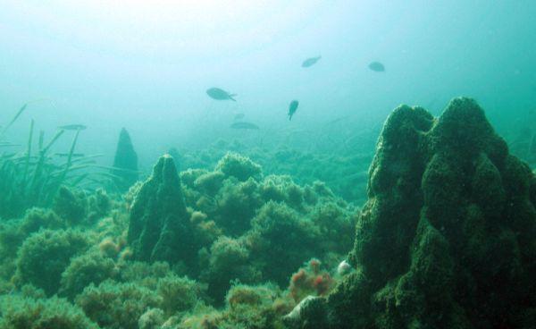 Fallece un buzo tras una inmersión con amigos en la playa de La Fabriquilla, en Cabo de Gata
