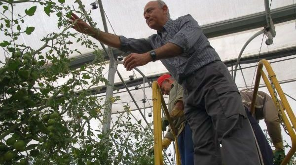 Agricultor tomate