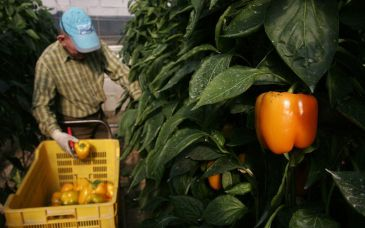 Riesgos laborales sector agrario