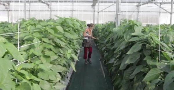 instantánea del video cocumental de Cajamar