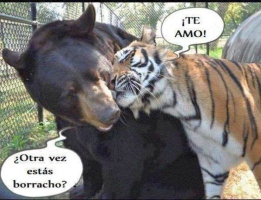 tigre borracho