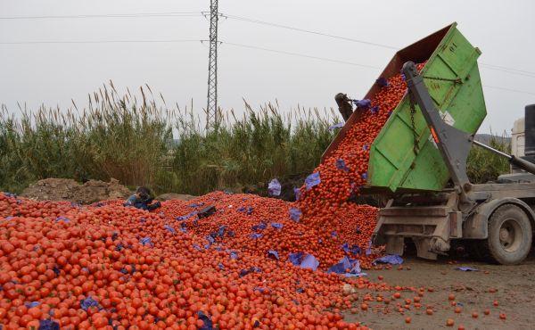 Asaja-Almería pide a las comercializadoras que prevean las posibles crisis de precios antes del inicio de campaña