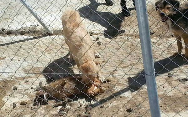 En una de las jaulas, el cadáver de uno de los perros permanece en el suelo