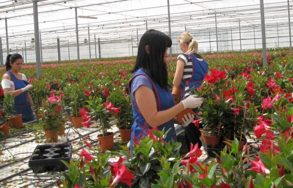 Interior de invernadero de plantas vivas