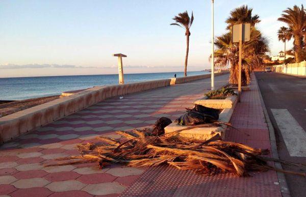 Restos de palmeras y bolsas con residuos en el paseo marítimo de Costacabana