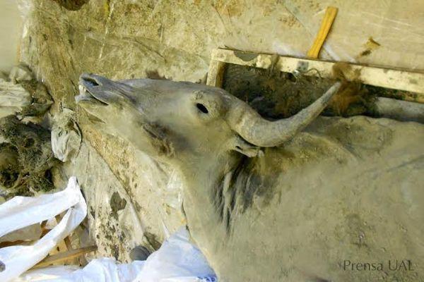Bisontes prehistóricos