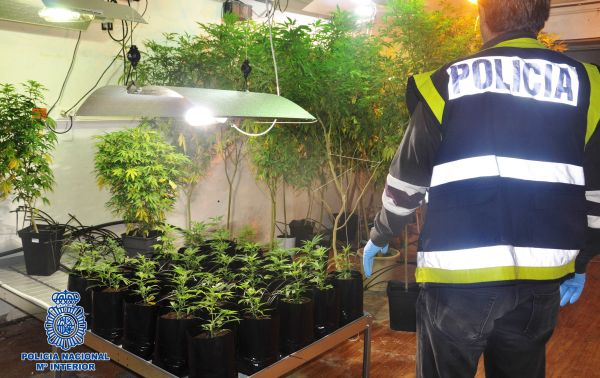 marihuana guardia civil