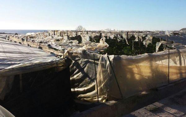 invernaderos destrozados adra 2