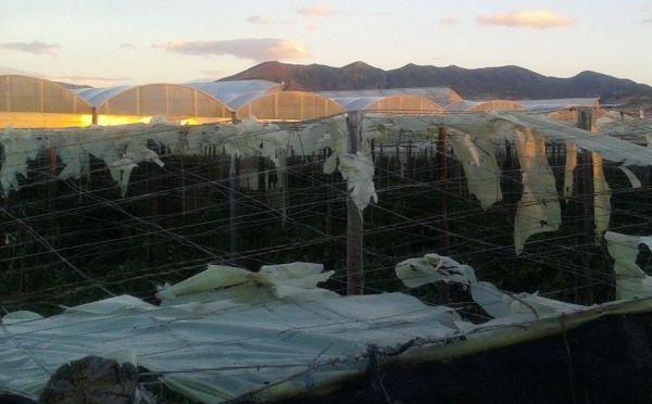 invernaderos destrozados adra