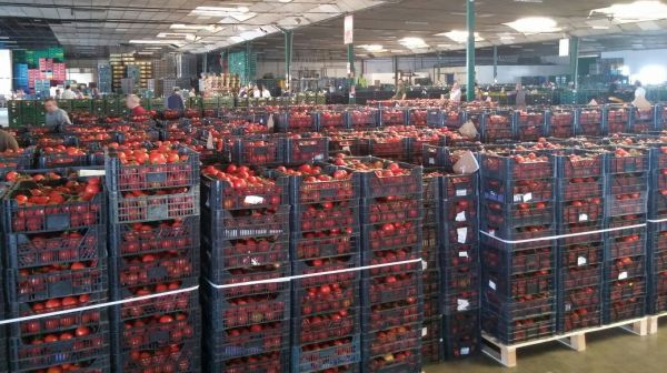 Resultado de la subasta de hortalizas del jueves 24 de septiembre almer a 360 - Muebles la union almeria ...