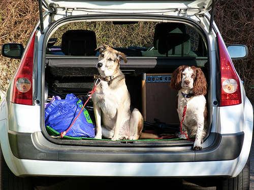 El Ejido anuncia la creación de un banco de ADN para caca de perros