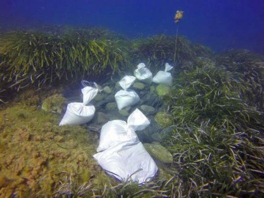 sombreado de algas invasoras