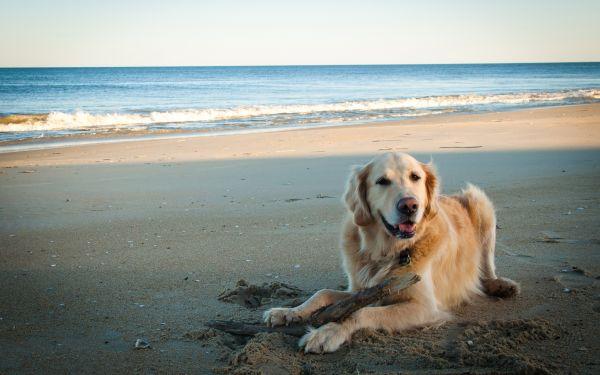 Reclaman una playa para perros en Almería capital