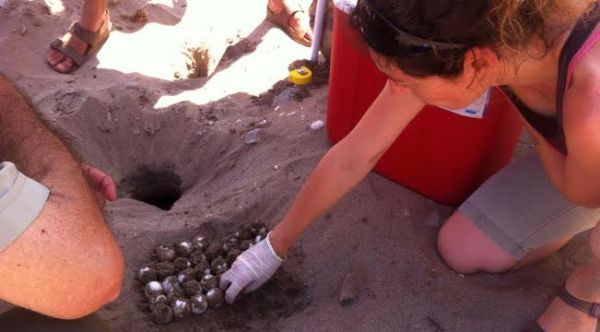 tortuga boba playa pulpí