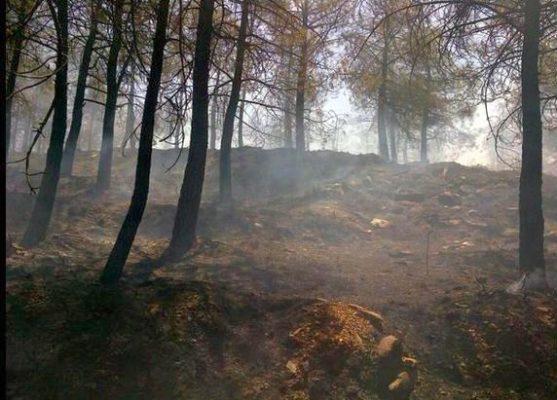 El Infoca controla el incendio forestal declarado en Tahal