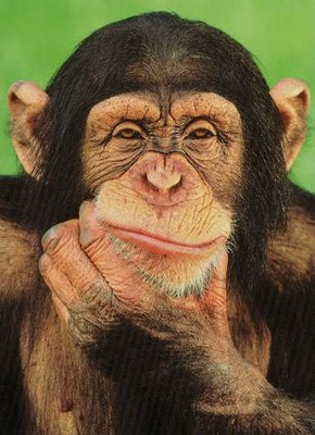 mono cabrón