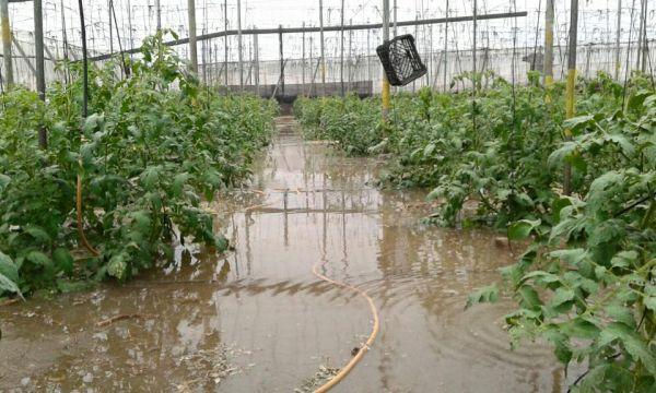 invernadero inundado en La Cañada (Foto publicada por Coag)