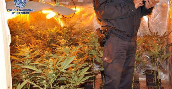 Plantación de marihuana localizada en la operación 'Tifón'