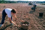 El Gobierno aprueba medidas urgentes de protección y ayuda al trabajador agrícola