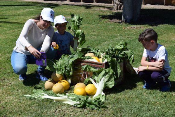 El consumo de frutas y hortalizas, clave en una alimentación sana