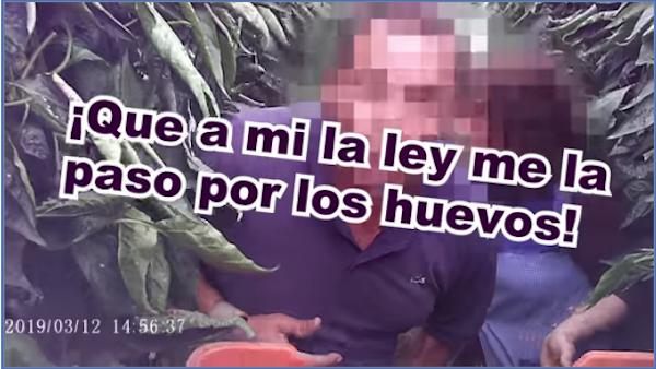 El SAT convoca una manifestación de trabajadores del campo y manipulado con un nuevo video