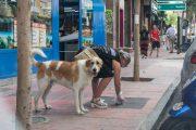 El Ayuntamiento de Almería aprueba multas a los dueños de mascotas que no limpien la orina de la vía pública