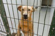 Adjudicados a una empresa el rescate y cuidado de los animales del Centro Zoosanitario de Almería