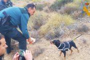 Rescatados un perro y cuatro jabalíes tras caer a un pozo abandonado de diez metros en Níjar