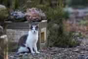 Almería es líder en maltrato animal