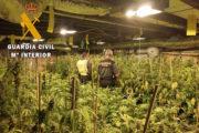 Descubren un laboratorio de alta tecnología de germinación de marihuana en Lucainena de las Torres