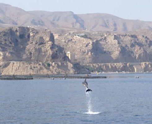 Delfines en Almería. Promar