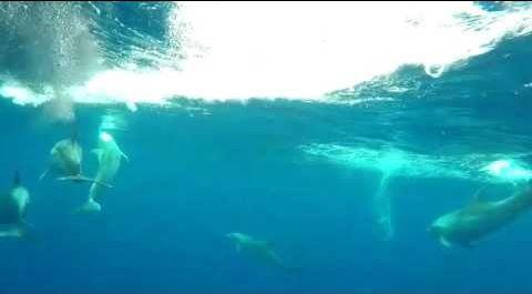 Delfines. Foto de archivo