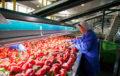 Andalucía supera los 3.300 millones de euros en exportaciones de frutas y hortalizas en los cinco primeros meses de 2019