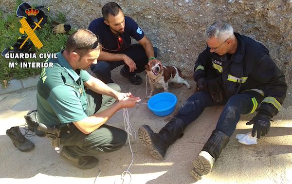 guardia civil perro